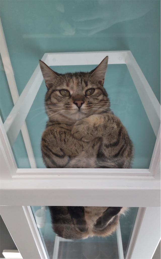 f:id:may-cat:20210813203325j:image