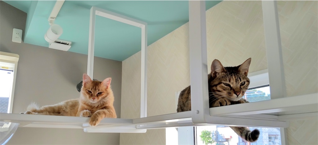 f:id:may-cat:20210814214502j:image