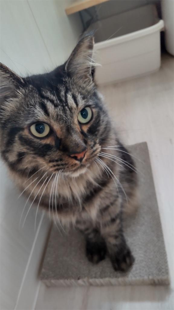 f:id:may-cat:20210816210746j:image