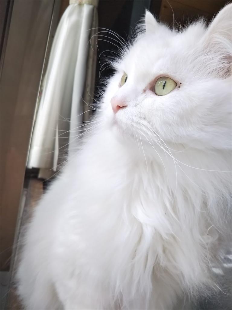 f:id:may-cat:20210818184325j:image