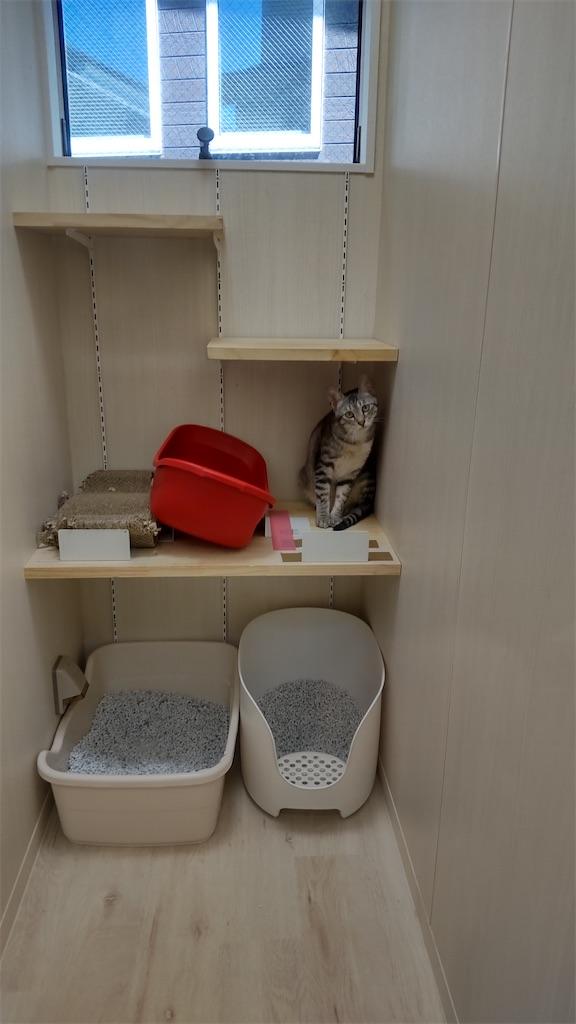 f:id:may-cat:20210825132459j:image