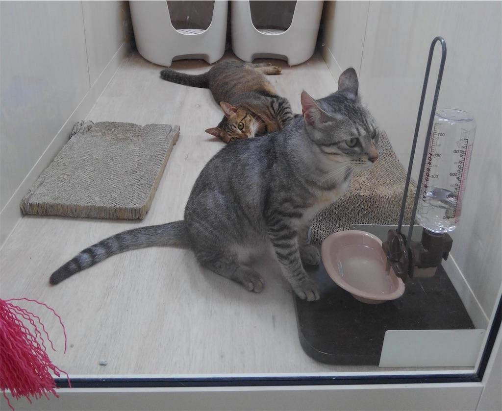 f:id:may-cat:20210825135621j:image