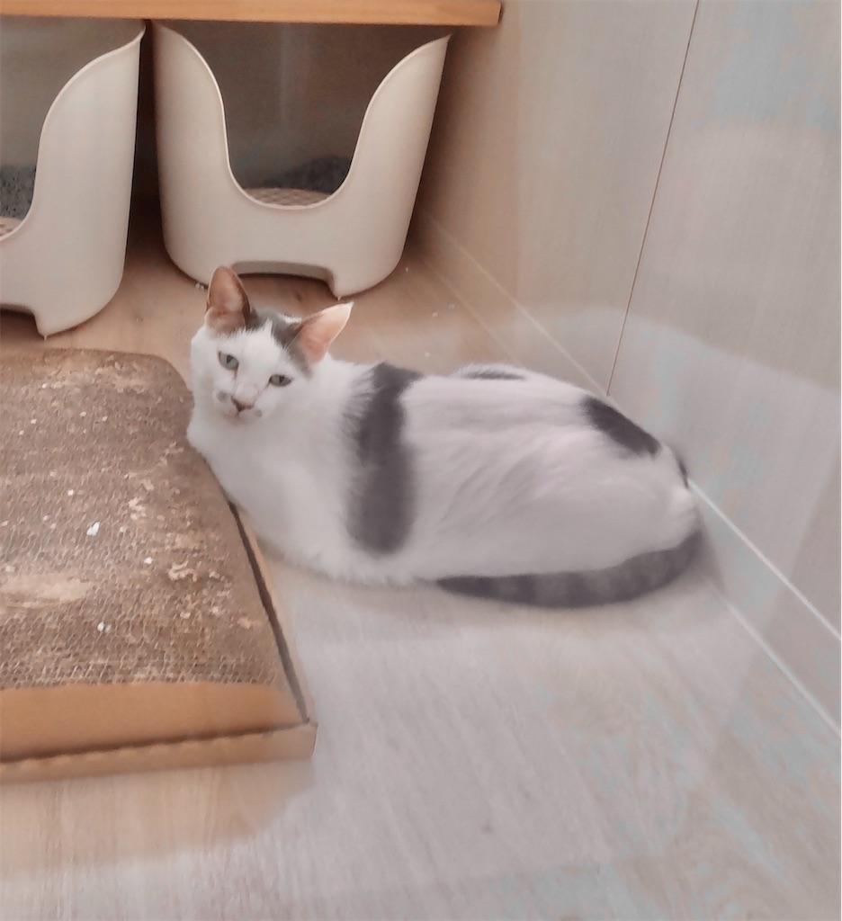 f:id:may-cat:20210826184527j:image