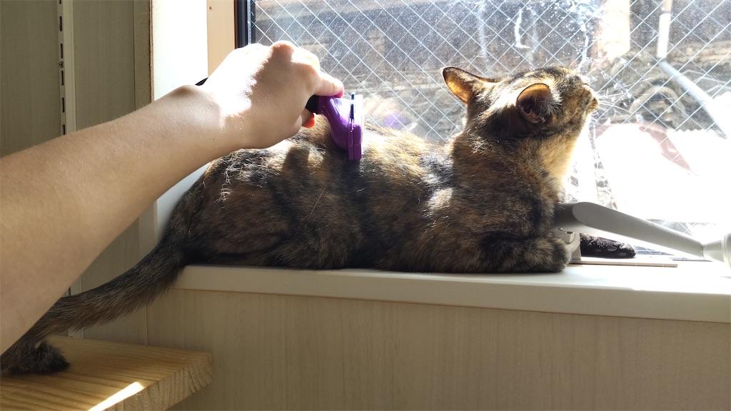 f:id:may-cat:20210828143552j:image