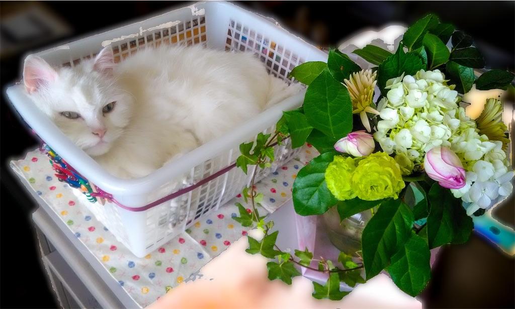 f:id:may-cat:20210829154030j:image