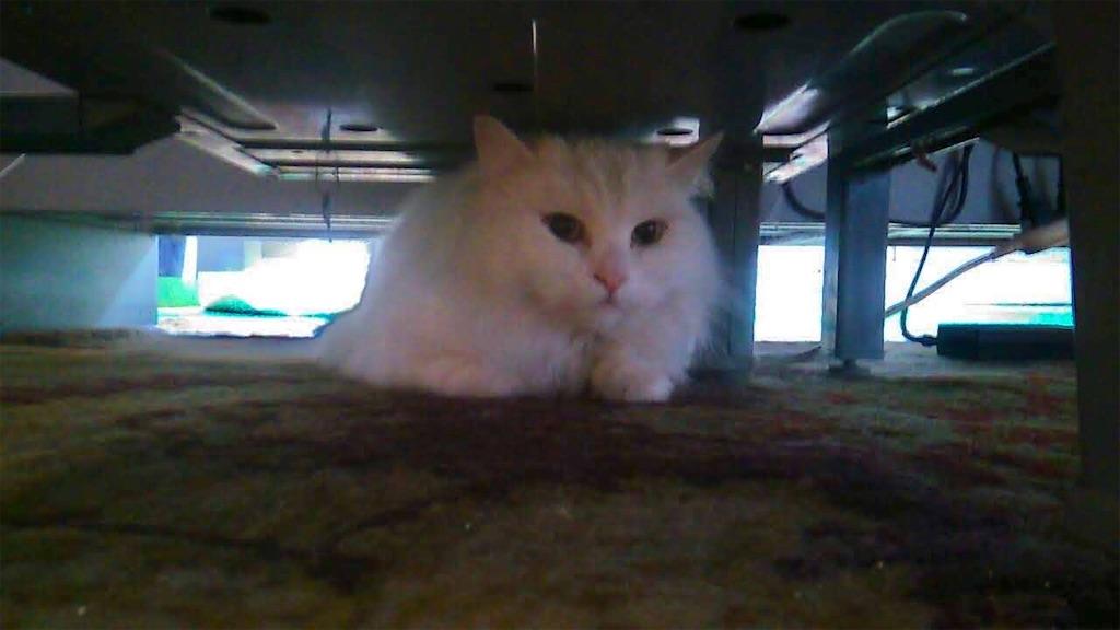 f:id:may-cat:20210902095126j:image