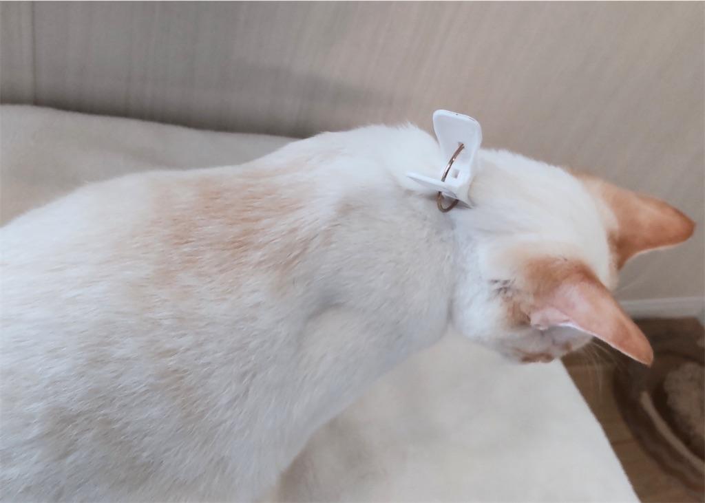 f:id:may-cat:20210908151552j:image