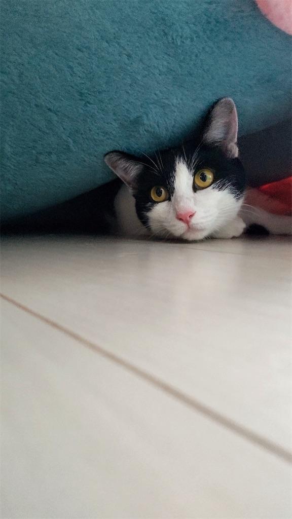 f:id:may-cat:20210915131603j:image