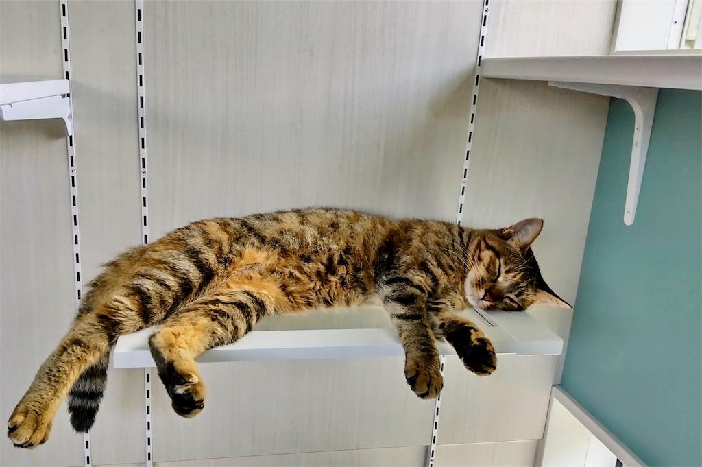 f:id:may-cat:20210915132711j:image