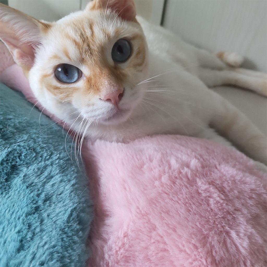 f:id:may-cat:20210921205341j:image
