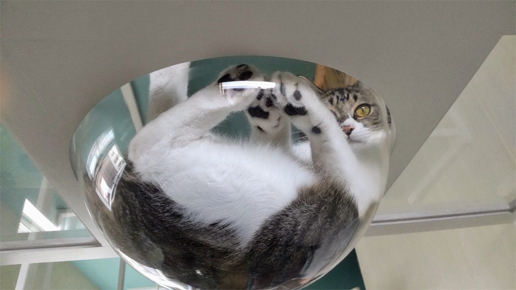 f:id:may-cat:20210927142903j:image