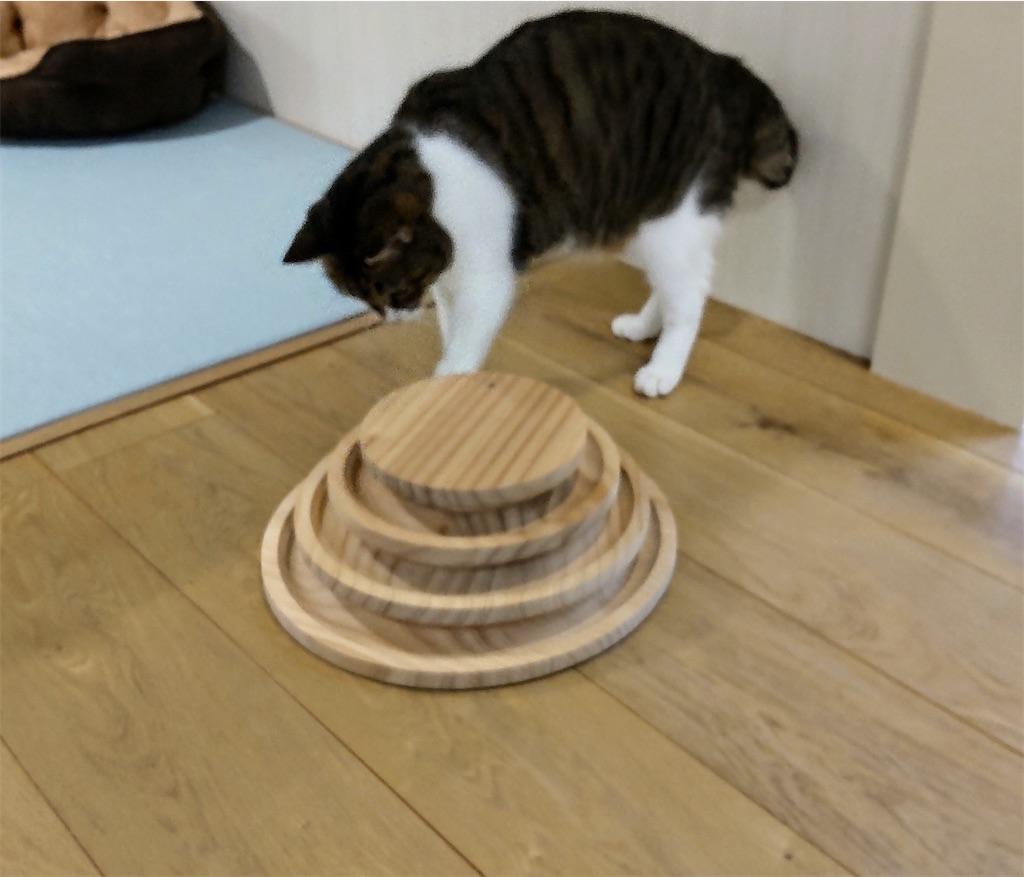 f:id:may-cat:20210928203558j:image