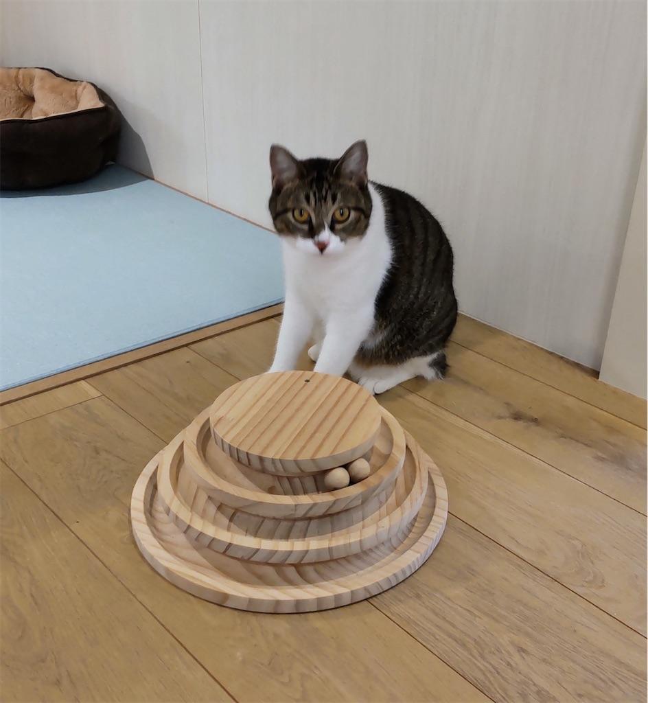 f:id:may-cat:20210928203620j:image
