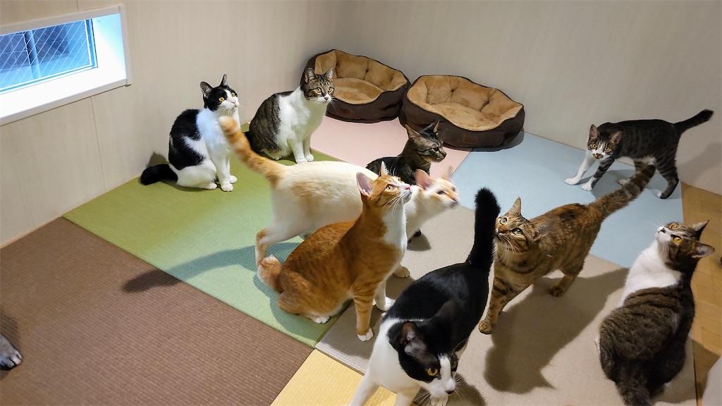 f:id:may-cat:20210928204339j:image