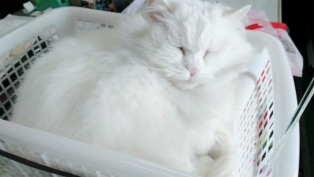 f:id:may-cat:20211003215250j:plain