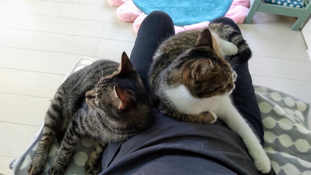 f:id:may-cat:20211006150248j:plain