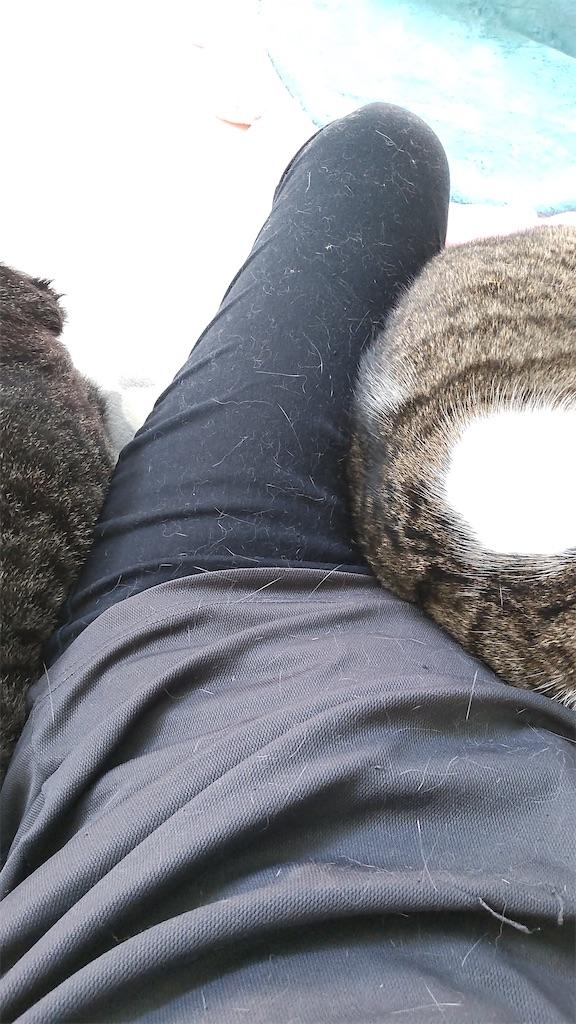 f:id:may-cat:20211006150251j:plain