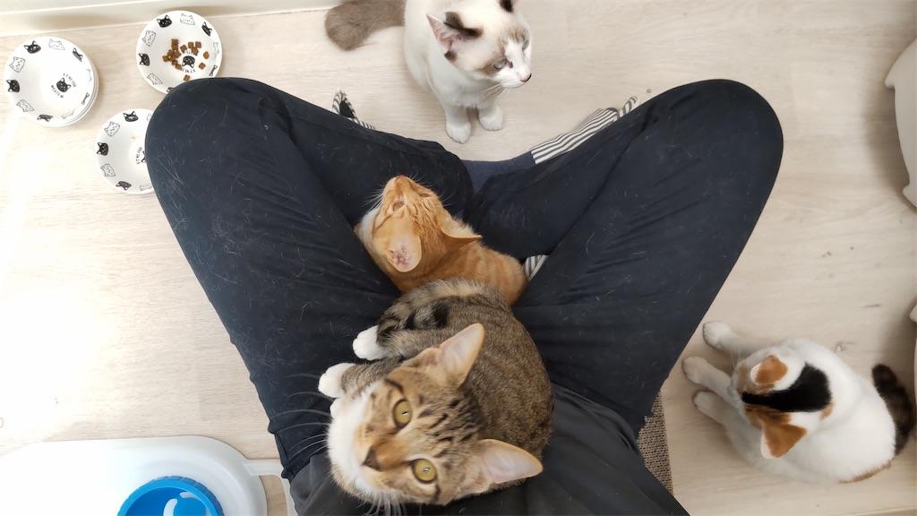 f:id:may-cat:20211006150331j:plain