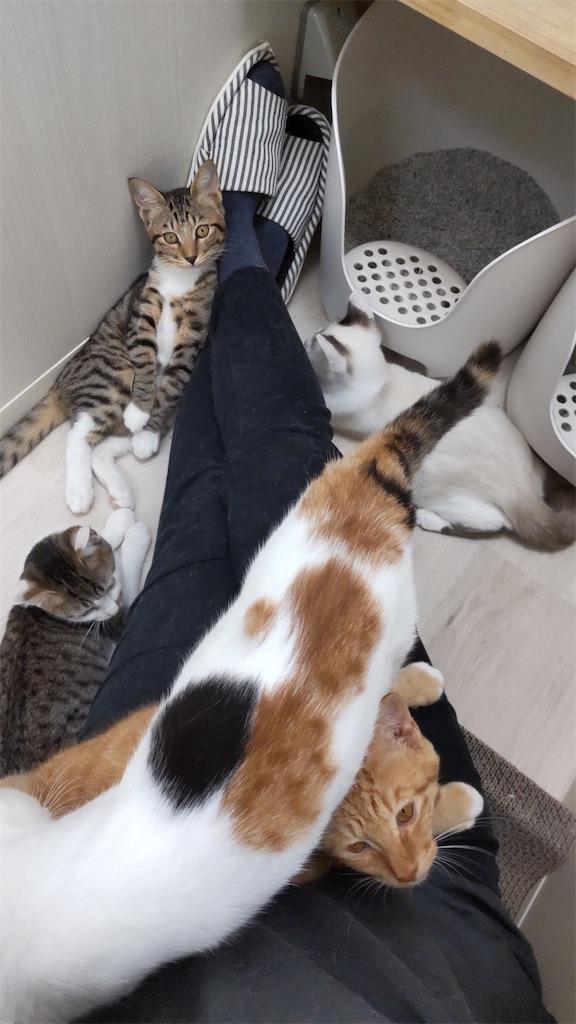 f:id:may-cat:20211006150335j:plain