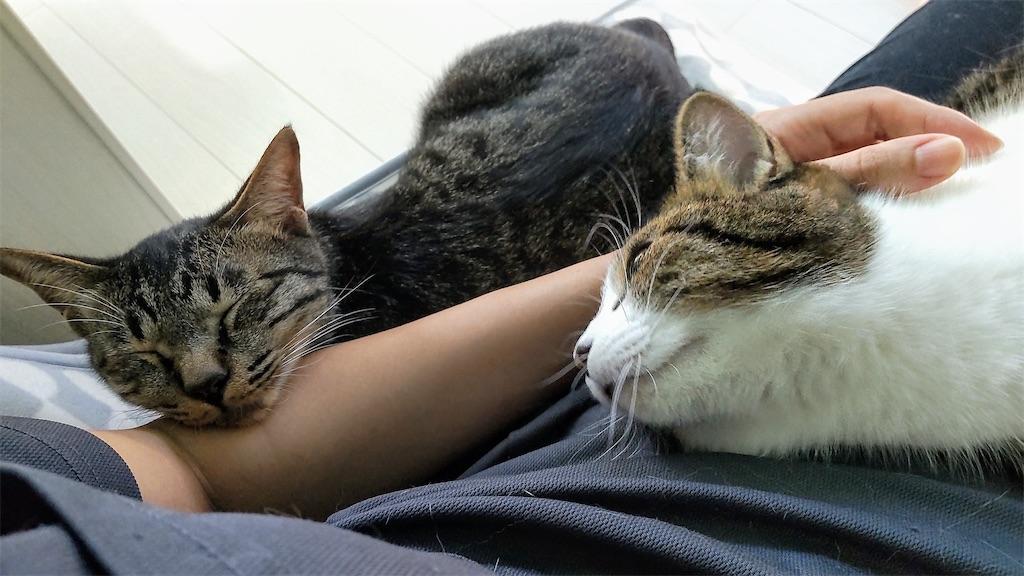 f:id:may-cat:20211006214441j:plain