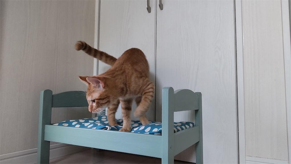 f:id:may-cat:20211007201648j:plain