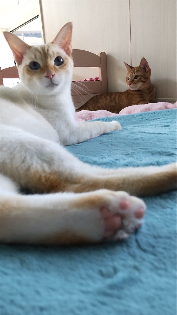 f:id:may-cat:20211007210533j:plain