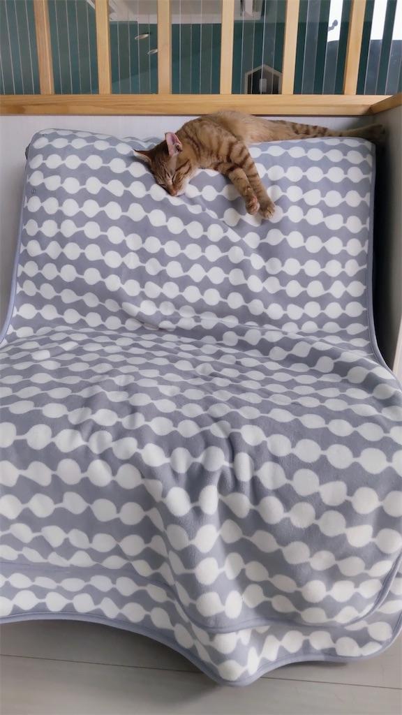 f:id:may-cat:20211012204255j:image