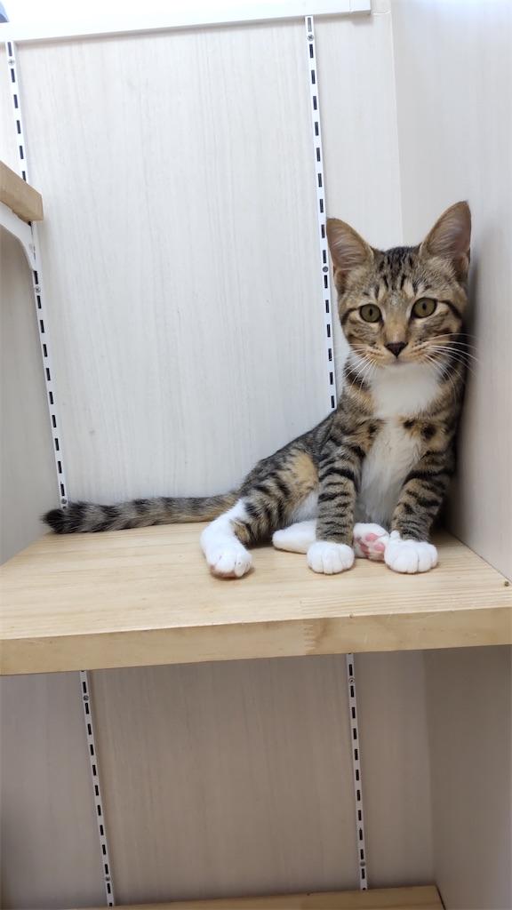 f:id:may-cat:20211014194507j:image
