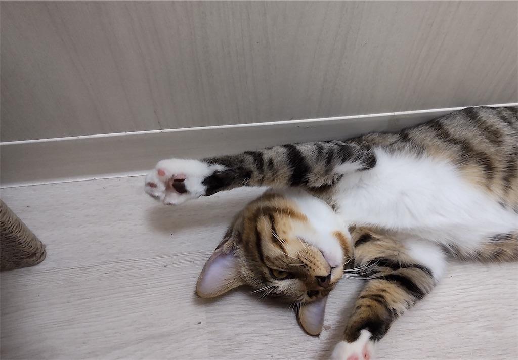 f:id:may-cat:20211014194905j:image