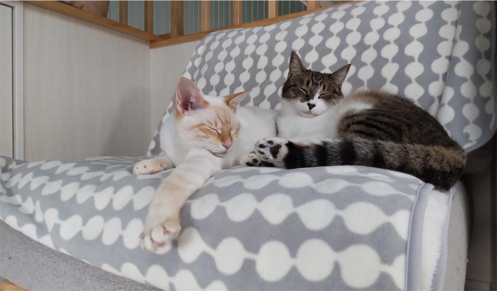f:id:may-cat:20211018215805j:plain