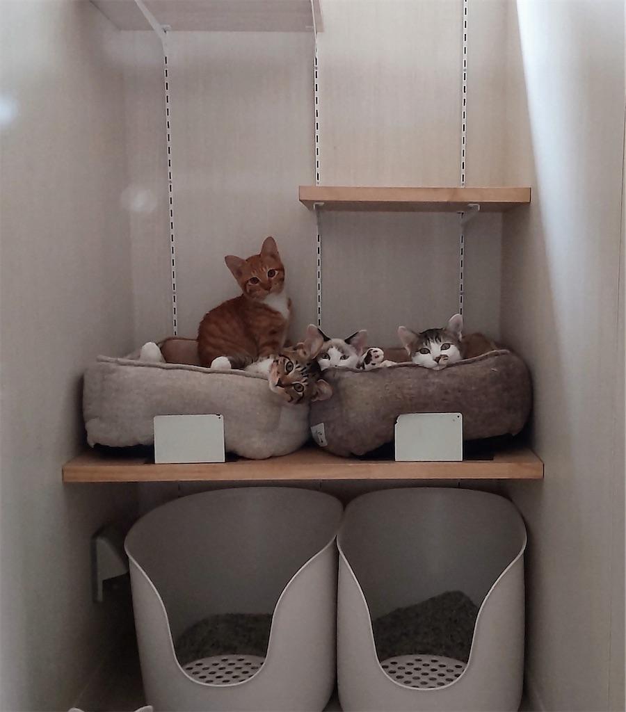 f:id:may-cat:20211020191839j:plain