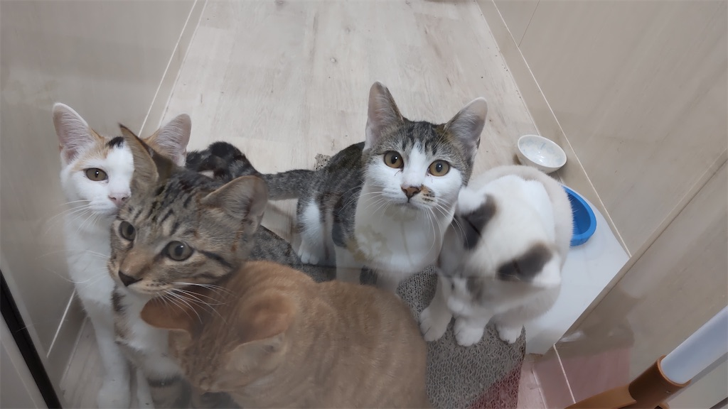 f:id:may-cat:20211020191919j:plain