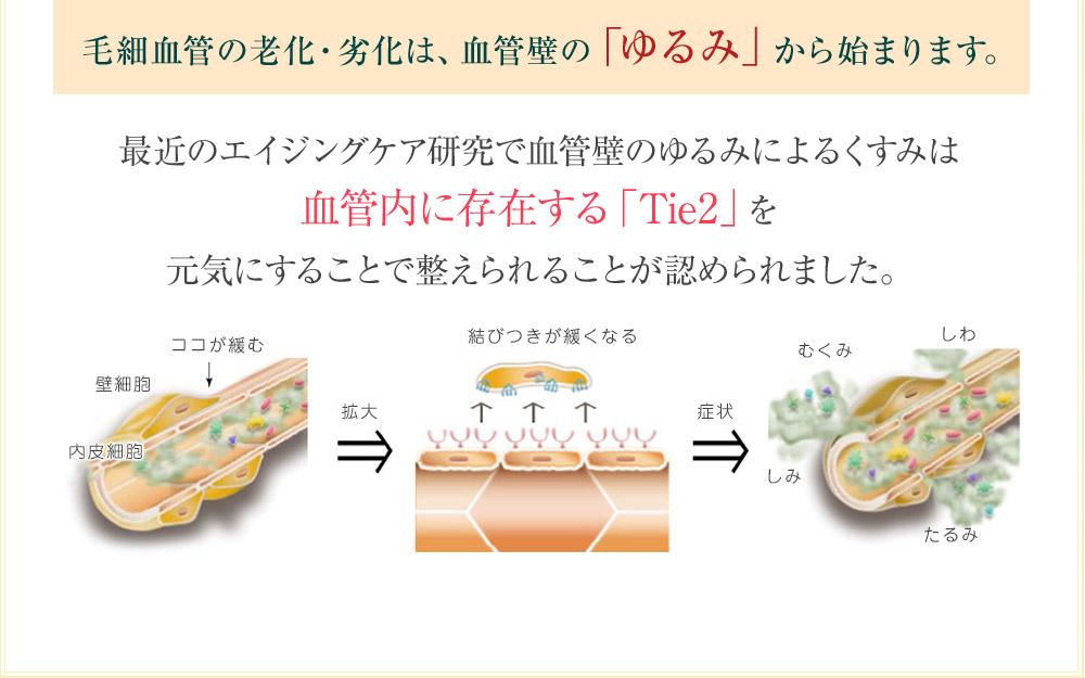 【Tie2PLUS BEAUTY導入美容液】 Tie2の美容効果 毛細血管ケア美容液