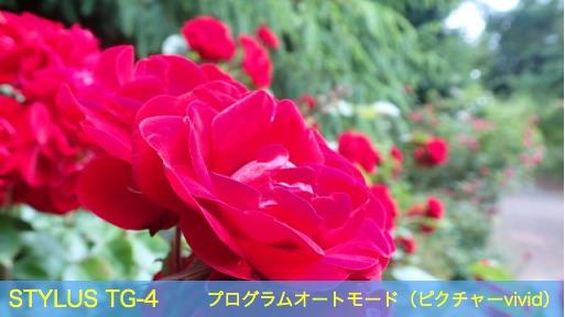 f:id:mayoi_inu:20150621190807j:plain