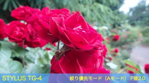 f:id:mayoi_inu:20150621191818j:plain
