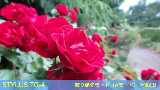 f:id:mayoi_inu:20150621191826j:plain