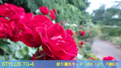 f:id:mayoi_inu:20150621191835j:plain