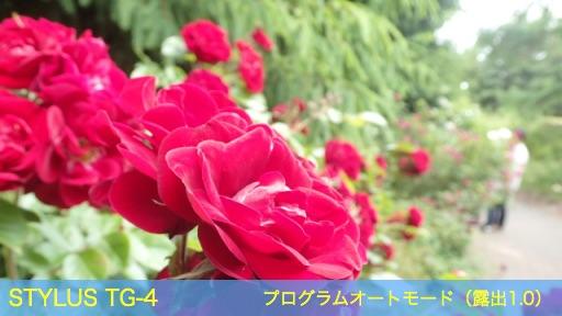 f:id:mayoi_inu:20150621193902j:plain