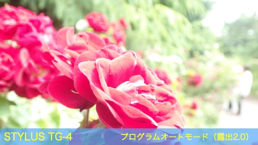 f:id:mayoi_inu:20150621193950j:plain