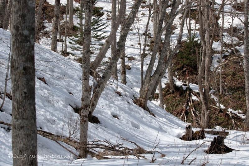 雪が残る釧路町森林公園