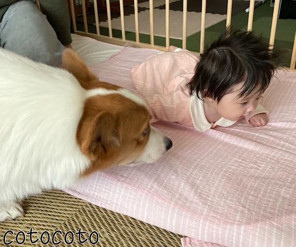赤ちゃん 犬