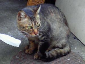f:id:mayuda:20100514103800j:image