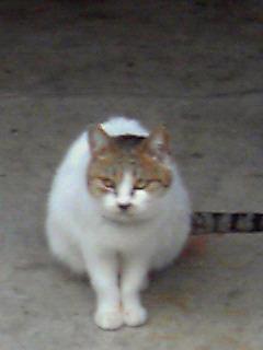 f:id:mayuda:20110224161600j:image:w200