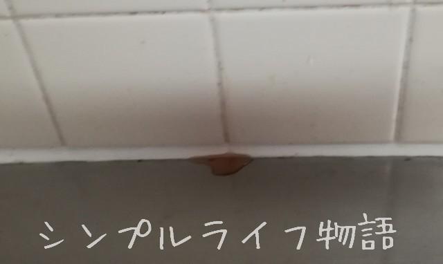 キッチンのタイル壁 目地の掃除2
