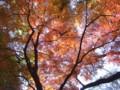 20081130綱島公園