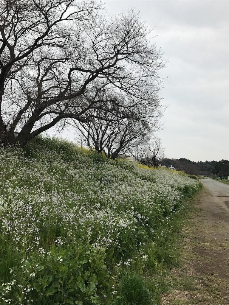 f:id:mazu-jirushii:20170401185433j:image