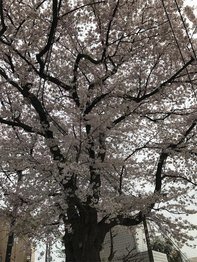 f:id:mazu-jirushii:20170411154732j:image