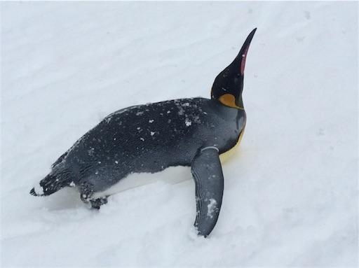 f:id:mbb-penguin:20160204211649j:plain