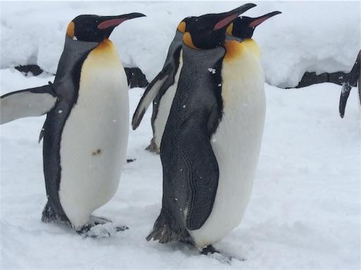 f:id:mbb-penguin:20160206211709j:image