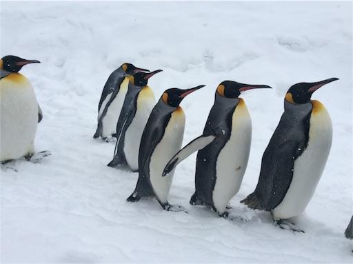f:id:mbb-penguin:20160206212014j:image